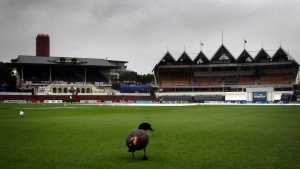 A duck walks on the outfield during a rain delay on the final day of the second test between England and New Zealand at the Basin Reserve in Wellington March 18, 2013. REUTERS/David Gray/Files