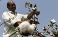 India puts off GM cotton seed order, easing pressure on Monsanto