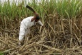 India's farmers seize offer of free registration of land sold on 'plain paper'