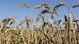Reuters Insider Crop Report: U.S. Corn