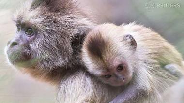 Animal spirits: What monkeys can teach us about investing - Investing 201