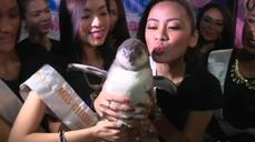 Philippines breeds its first baby penguin