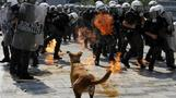 """Sausage the """"riot dog"""" dies of heart attack"""