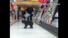 Black bear cub goes Sunday shopping