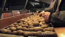 Salty potatoes spur food revolution