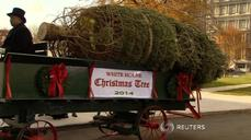 White House Christmas Tree arrives by horse-drawn carriage