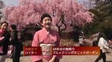 NYの桜祭りに約7万7千人来場(4日)