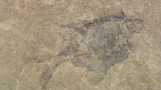 Evolution opponent discovers prehistoric fossils