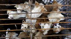 China's dog meat festival causes outcry
