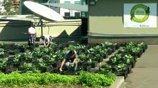 Shopping mall uses garbage to create a thriving rooftop farm for employees