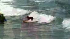 Cecil the lion and surfing dogs top week's animal stories
