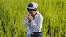 Rural Thailand struggles after rice scheme