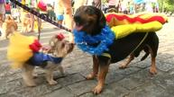 Celebrations ring out with monkeys, dogs and groundhogs