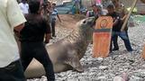 New ESl lesson plans - Animals wash up in Peru, specialists blame El Nino