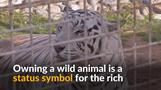 UAE park offers refuge for neglected wild animals