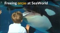 Animal right activists call on SeaWorld to free its orcas