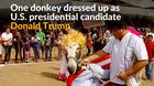 Mexicans celebrate donkeys' hard work at annual festival