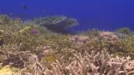 Some coral reefs thriving, report says