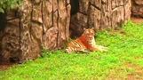 A new zoo opens in Pyongyang