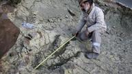 Huge dinosaur track found in Bolivia