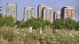Urban Romanian wetland gets protected status