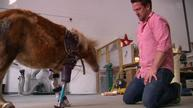 Virginia's 'Dr. Doolittle' gives amputated animals new lease on life