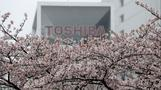 Toshiba warns future is in doubt after filing results