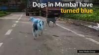 Dogs in Mumbai turn blue from chemical dye