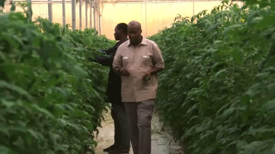 Mali's high-tech greenhouse an oasis against climate change
