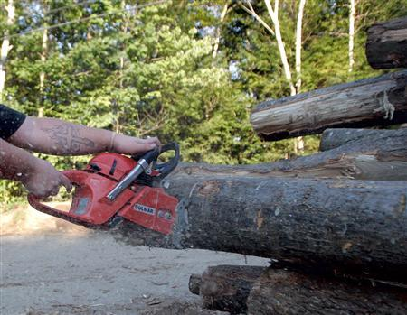 A man chainsaws through a log in East Windham, Maine in this September 7, 2005 file photo. A 43-year-old German decided to settle his imminent divorce by chainsawing a family home in two and making off with his half in a forklift truck. REUTERS/Jessica Rinaldi