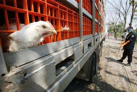 A veterinary inspector sprays disinfectant on a truck carrying chickens at a checkpoint in Bangkok February 1, 2007. Scientists have found that a strain of the H5N1 bird flu virus circulating in Thailand is resistant to the flu drug amantadine, and they called for rigorous study of H5N1 strains to better treat human victims. REUTERS/Chaiwat Subprasom