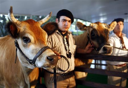 Farm workers Ricardo Visconti (L) and Ruben Perez hold Jersey transgenic cows, four-year-old Pampa Victoria and two-year-old Pampa Argentina (R) in Buenos Aires, April 17, 2007. REUTERS/Enrique Marcarian