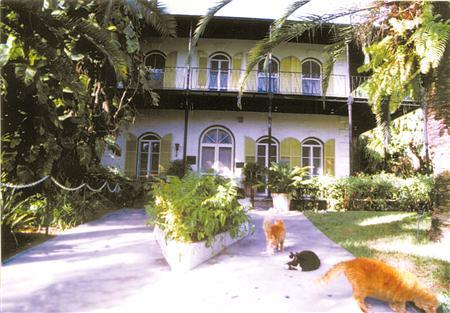 Cats are seen outside of the Ernest Hemingway Home & Museum in an undated handout photo, released to Reuters on July 17, 2007. A game of cat and mouse is under way between the U.S. government and Florida's Ernest Hemingway Home & Museum over the fate of dozens of felines roaming the former home of the Nobel Prize-winning author. REUTERS/Ernest Hemingway Home & Museum/Handout
