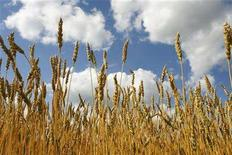 <p>Canadian wheat grows in a field near Teulon, Manitiba, July 26, 2006. REUTERS/Shaun Best</p>