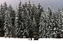 <p>La municipalité de Kalajoki, dans l'ouest de la Finlande, va fabriquer cet hiver de la neige artificielle et la conservera toute l'année dans la sciure pour faire face au réchauffement qui risque d'hypothéquer la prochaine saison de ski de fond. /Photo d'archives/REUTERS</p>