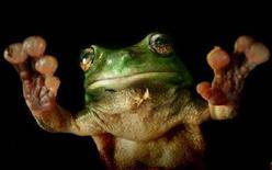 <p>Immagine d'archivio di una rana. REUTERS/Tm Wimborne PP04110153 TBW/CN</p>