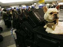 <p>Бульдог Ганнибал готовится к участию в выставке собак в Нью-Йорке 14 февраля 2007 года. Расходы, которые несут американские граждане на содержание домашних питомцев, могут побить в 2008 году новый рекордный уровень, несмотря на опасения по поводу рецессии и возможных проблем в секторе потребления. (REUTERS/Shannon Stapleton)</p>