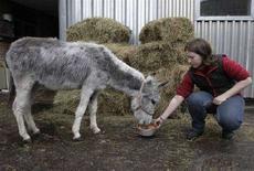 <p>L'impiegata di uno zoo dà da mangiare a Monika, l'asina che ha lavorato per 19 anni con il balletto russo Mariinsky a San Pietroburgo. REUTERS/Alexander Demianchuk</p>