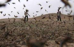 <p>Люди распыляют пестициды над полем, покрытым роями саранчи в 100 километрах от Душанбе 6 апреля 2008 года. Таджикистан срочно нуждается в помощи в борьбе с нашествием саранчи, которая угрожает уничтожить продовольственные запасы страны, сообщила в пятницу Организация объединенных наций. (REUTERS/Nozim Kalandarov)</p>