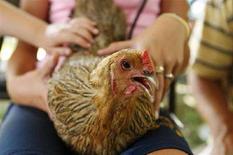 <p>Un pollo fotografato negli Stati Uniti. REUTERS/Lucas Jackson (UNITED STATES)</p>