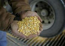 <p>Raw corn is shown as it is unloaded for processing at the Lincolnway Energy plant in the town of Nevada, Iowa, December 6, 2007. REUTERS/Jason Reed</p>