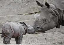 <p>Cámaras escondidas en la selva indonesia han registrado imágenes poco comunes de los rinocerontes de Java, una especie en grave peligro de extinción, que ayudarán a comprender los patrones de comportamiento de este animal, explicó el jueves el grupo de conservación de la vida salvaje WWF. Desde su instalación el mes pasado en el Parque Nacional de Ujung Kulon, en la región occidental de la isla de Java, los rinocerontes han aparecido ante las cámaras en dos ocasiones, y una madre rinoceronte dañó una cámara golpeándose contra ella. Photo by Johannes Eisele/Reuters</p>
