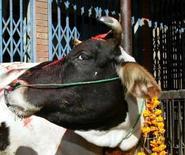 <p>Après le départ de Gyanendra, roi déchu du Népal, c'est au tour de ses vaches de s'inquiéter de leur sort deux jours après la transformation du palais royal en musée. /Photo d'archives/REUTERS</p>