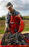 <p>La raccolta dell'uva nella zona del Montepulciano. REUTERS/Alessia Pierdomenico</p>