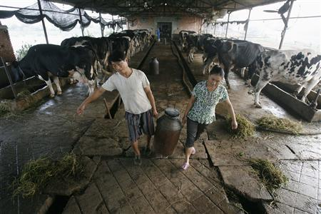Farmers transport milk at a farm on the outskirts of Wuhan, Hubei province September 21, 2008. REUTERS/Stringer