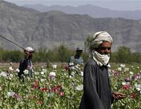 <p>Men destroy opium poppies during a poppy eradication campaign in the eastern province of Ningarhar, Afghanistan, April 9, 2007. REUTERS/Ahmad Masood</p>
