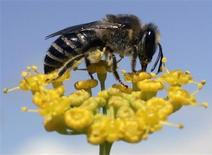 <p>Un chercheur de l'université du Queensland en Australie aurait mis en évidence le fait que les abeilles sont capables de compter jusqu'à quatre. /Photo d'archives/REUTERS/Miguel Vidal</p>