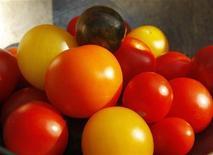 <p>Pomodori di diversi colori raccolti a Medford, Massachusetts, in un'immagine d'archivio. REUTERS/Brian Snyder</p>