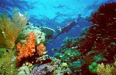 <p>Immagine d'archivio. EDITORIAL USE ONLY REUTERS/HO/Great Barrier Reef National Park Authority DG/RCS</p>