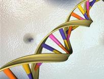 <p>A double helix is seen in an undated illustration. REUTERS/File</p>